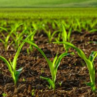Agriculture and Food Technology Research Paper Topics