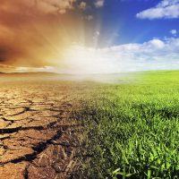 Environment Essay Examples